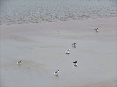 Beach Seagulls by Kathy Long