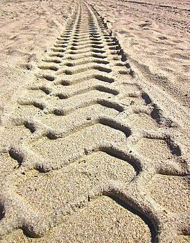 Gwyn Newcombe - Beach tracks