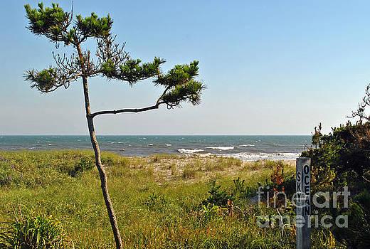 Jost Houk - Beach Tree
