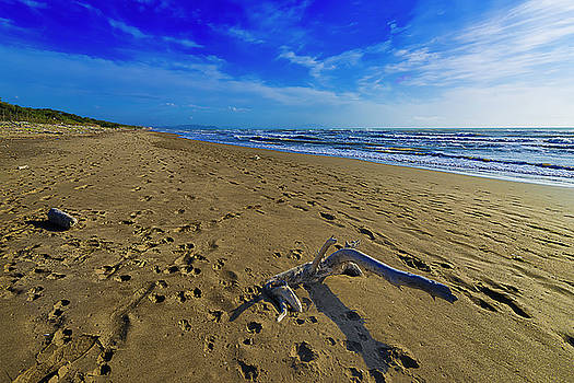 Beach With Wood Trunk - Spiaggia Con Tronco Ii by Enrico Pelos