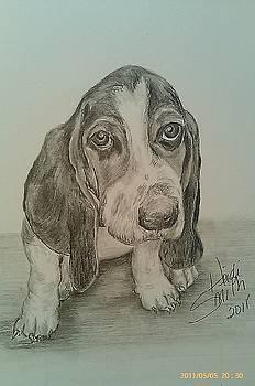 Beagle by Heidi Smith