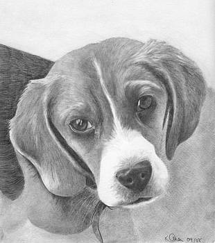 Beagle by Karen  Townsend