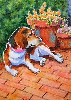 Beagle on Brick Patio by Rachel Armington