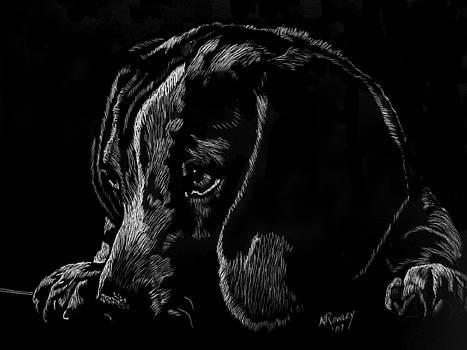 Beagle Pup by Norma Rowley