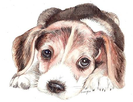 Beagle Puppy by Morgan Fitzsimons