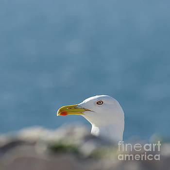 Beak-a-Boo by John Janicki