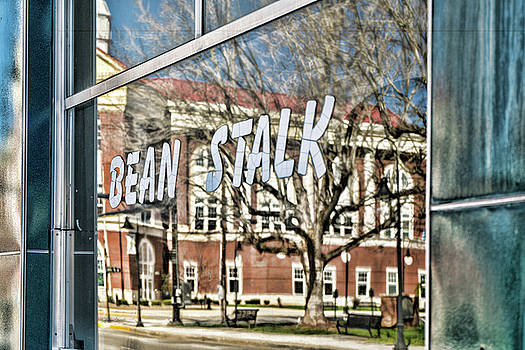 Sharon Popek - Bean Stalk Reflection