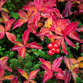 Bearberry by Tim Newton