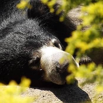 #bear #cleveland #clevemetroparks by Pete Michaud