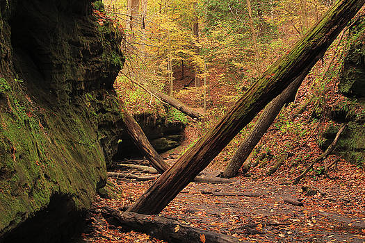 Bear Hollow in Autumn 2 by Greg Matchick