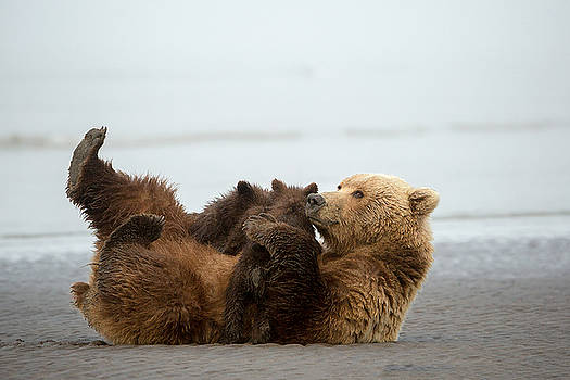 Bear Hug by Renee Doyle