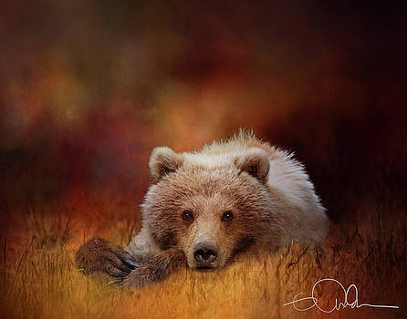 Bear in the grass - deep Autumn colors by Gloria Anderson
