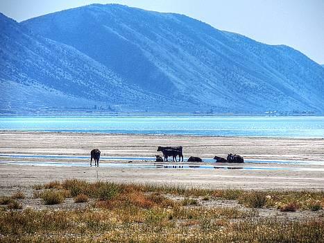 Bear Lake Beach Cows by Charlotte Schafer