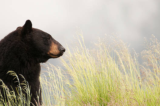 Bear Necessities by Peak Photography by Clint Easley