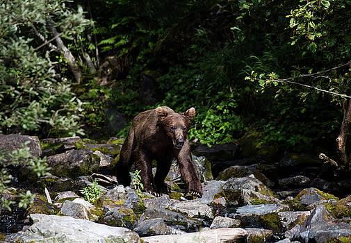 Gloria Anderson - Bear on the rocks