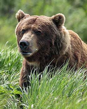 Bear pose 1 by Zane Giles