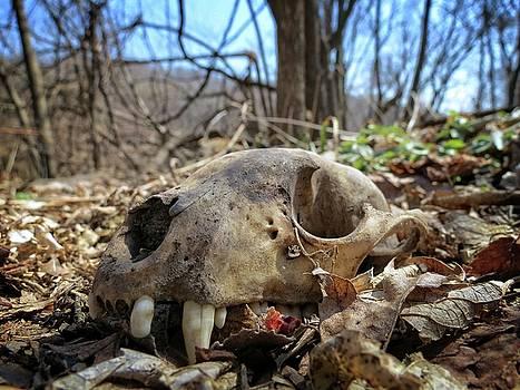 Bear Skull by Kyle West