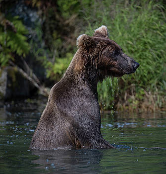 Bear standing in the water by Gloria Anderson