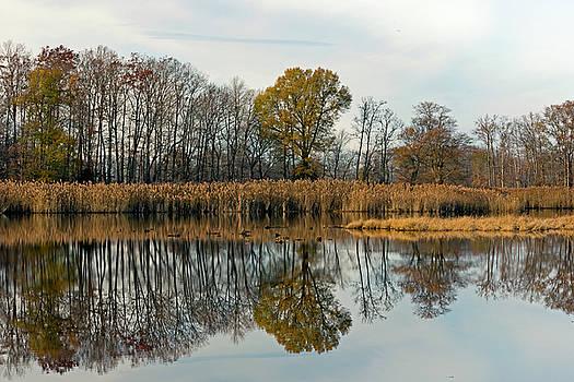 Bear Swamp Mirror by Jennifer Nelson