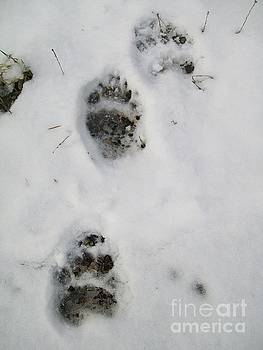 Bear Tracks In The Snow by Cindy Ruprecht