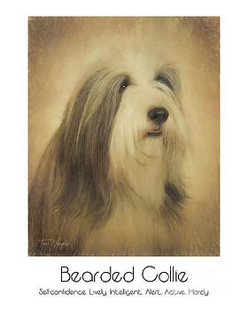 Bearded Collie Poster by Tim Wemple