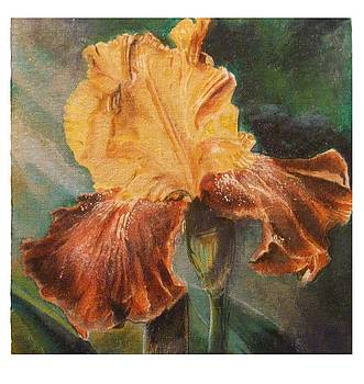 Bearded Iris by Crispin  Delgado