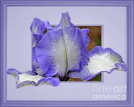 Bearded Iris Flower Peeking Out by Smilin Eyes  Treasures