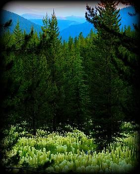 Leah Grunzke - Beargrass Vista
