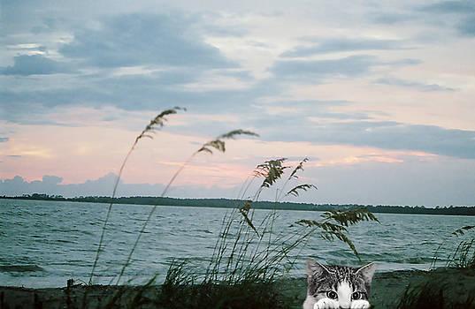 Bearly Beachin by Cynthia Leaphart