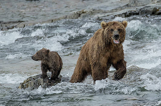 Bears Being Watchful  by Cheryl Strahl