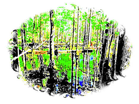 Beaty in the Swamp by Cathy Harper