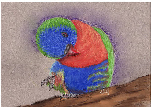 Beau the lorikeet. by Vicki Thompson