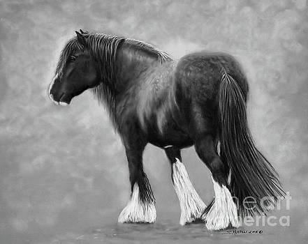 Sandra  Huston - Beau the Shire Draft Horse