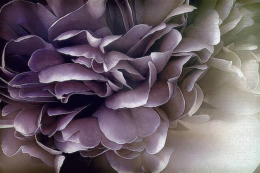 Beaujolais by Darlene Kwiatkowski
