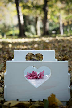 Beautiful baby bed in autumn leaves by Newnow Photography By Vera Cepic
