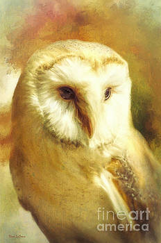 Beautiful Barn Owl by Tina LeCour