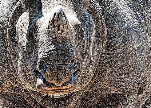 Beautiful Beast by Pete Rems