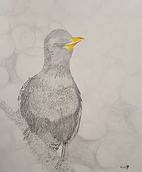 Beautiful Bird by Adekunle Ogunade