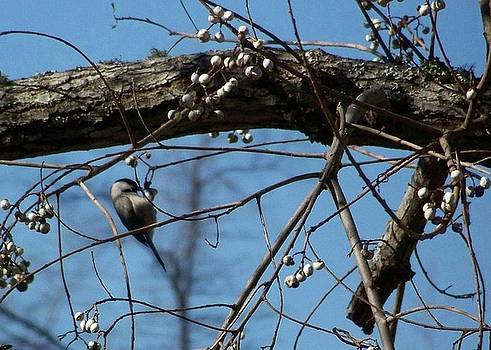 Beautiful Bird In Tree by Susan Anderson