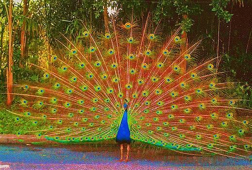 Beautiful Bird by Iris  Mora