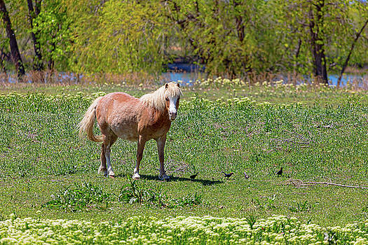 Beautiful Blond Horse and Four Little Birdies by James BO Insogna