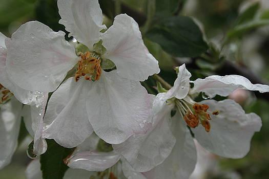 Beautiful Blossom by Ashley Vaughn