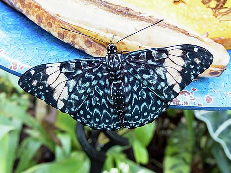 Beautiful Blue and White Butterfly by Bob Slitzan