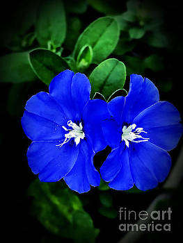 Beautiful Blue by JB Thomas