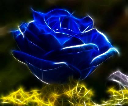Beautiful Blue Rose by Pamela Johnson