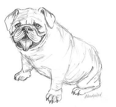 Beautiful Bulldog by Deborah Willard