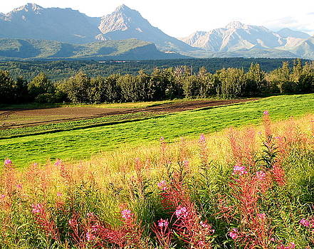 Beautiful Butte Alaska by Sheila J Hall