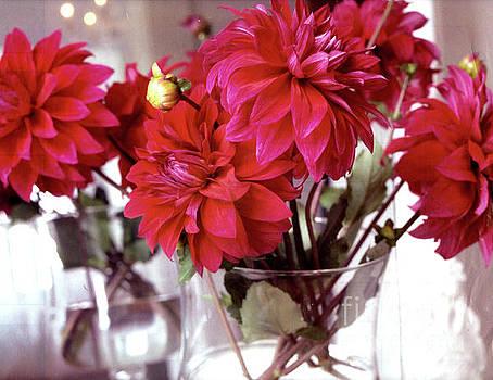 Beautiful Dahlias  by Ruth Housley