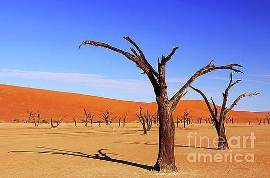 Beautiful Dead Vlei, Namibia by Wibke W