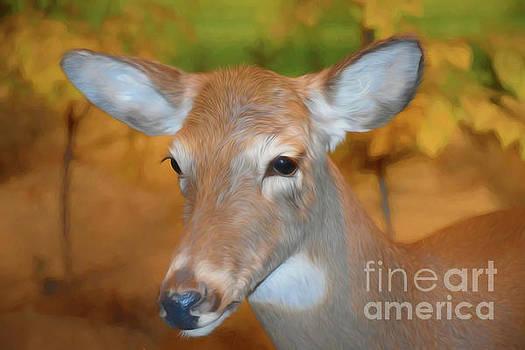 Beautiful Deer 2 by Ray Shrewsberry